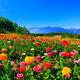 標高1250mにある天空の花園 富士見高原 花の里