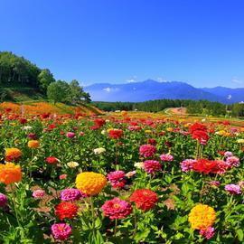 富士見高原リゾート 花の里